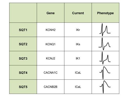 Genotipe göre SQTS sınıflaması (Moreno-Reviriego & Merino'dan alınmıştır)