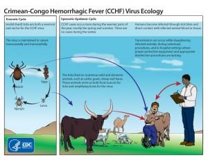 Resim Kaynağı: www.cdc.gov