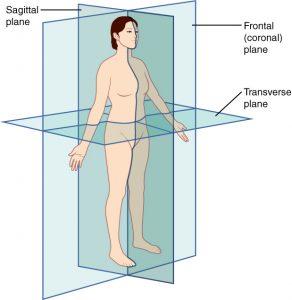 Anatomik kesitler