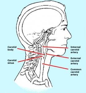 Karotid sinüs anatomisi