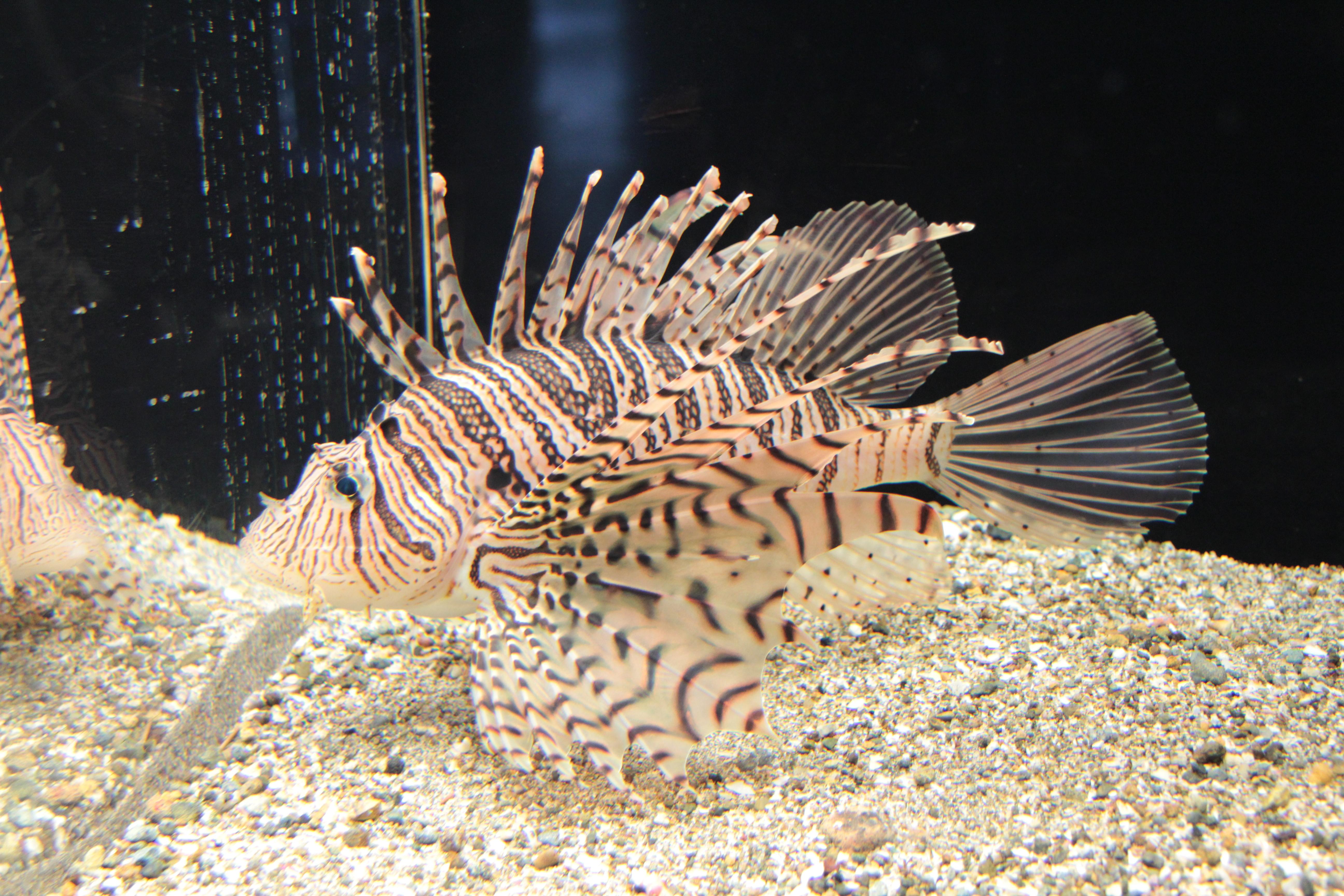 En zehirli balık ve etkileri nelerdir