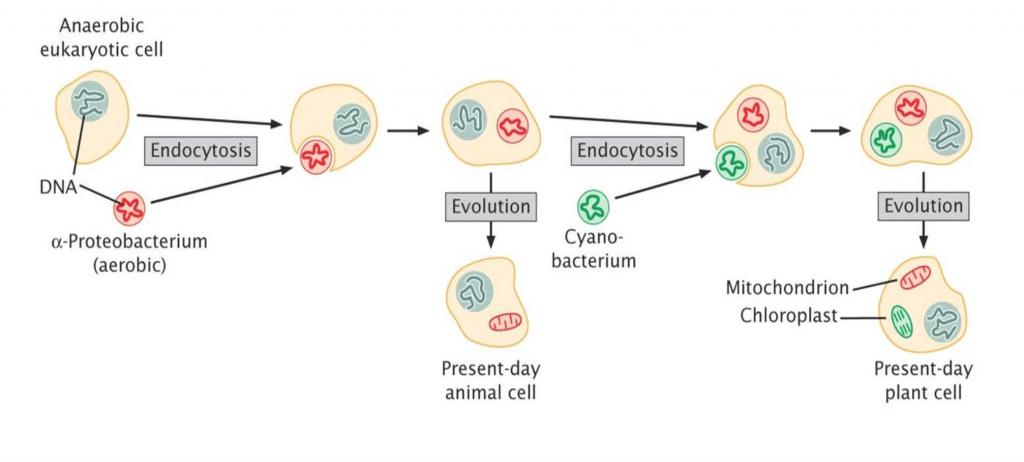 Sepsis: Prokalsitonini anlamak... 2